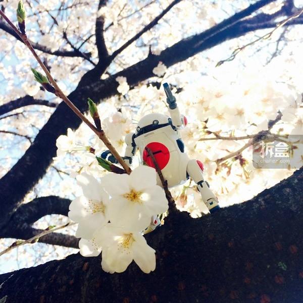 wego-colletion-japan-2015 (3)